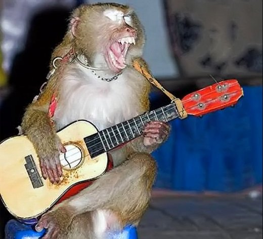 this monkey is arranging guitar for your music