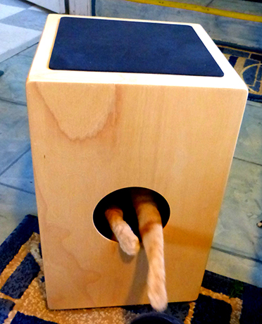 cat in a cajon is mixing percussion like a pro